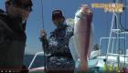 フラッシング鯛ラバ「 アマダイ爆釣」