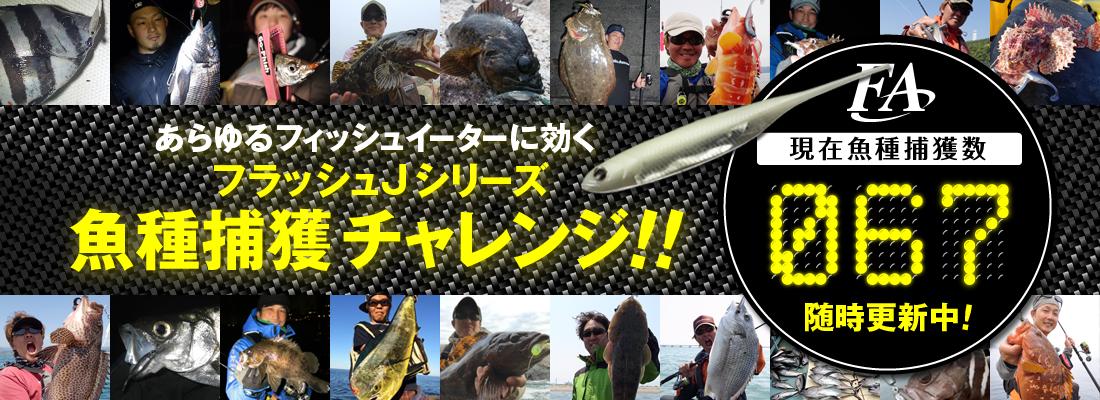 フラッシュJシリーズ! 魚種捕獲チャレンジ!