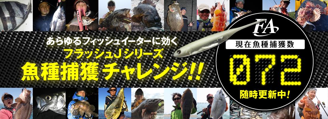 フラッシュJシリーズ 魚種チャレンジ