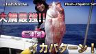 大鯛最強イカパターン!ショート動画|フィッシュアロー釣りちゃんねる