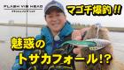 魅惑のトサカフォール⁉マゴチ爆釣_ショート動画