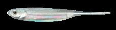FLASHJ29